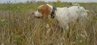 ΕΡΩΤΗΣΗ: Χρηματοδότηση ΟΤΑ για δράσεις περίθαλψης ζώων συντροφιάς