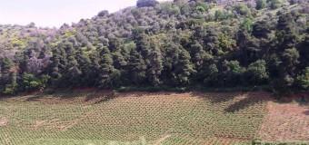 ΕΡΩΤΗΣΗ | Η Κυβέρνηση κωφεύει στην απόγνωση των πολιτών για τους δασικούς χάρτες