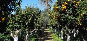 ΑΝΑΦΟΡΑ | Κλοπές εσπεριδοειδών στο Δήμο Ξυλοκάστρου-Ευρωστίνης