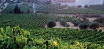 ΕΡΩΤΗΣΗ | Καταστροφές στις καλλιέργειες από τον καύσωνα