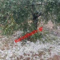 ΔΕΛΤΙΟ ΤΥΠΟΥ | Συνάντηση στον ΕΛΓΑ για τις ζημιές από τη χαλαζόπτωση