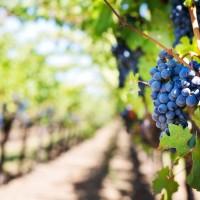 ΕΡΩΤΗΣΗ | Εμπαιγμός με την κατάργηση του Ειδικού Φόρου στο Κρασί